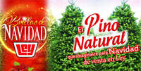 Pino Natural